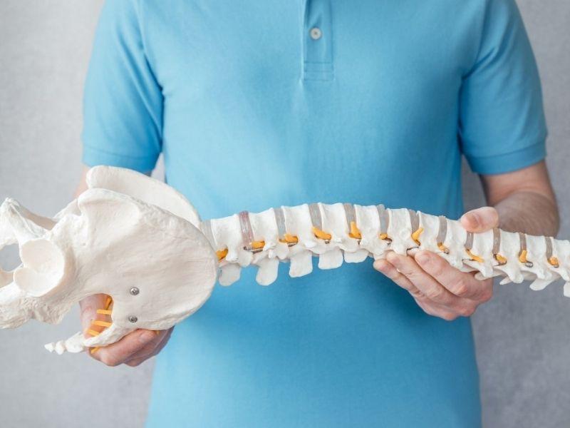 La lordosi lombare è una curvatura fisiologica della colonna vertebrale.